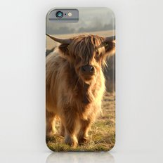 Young Highland Cow iPhone 6 Slim Case