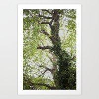 Green Canopy Art Print