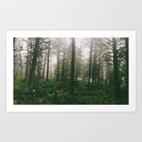 Coastal Forest Art Print