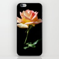 Rose of St. James iPhone & iPod Skin