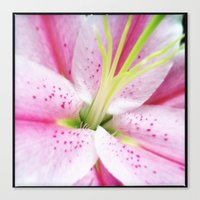 Pink Lilly IV Canvas Print