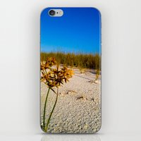 Beach Bouquet iPhone & iPod Skin