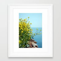 Rape Flowers 1 Framed Art Print