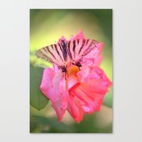 Old Scarce Swallowtail B… Canvas Print