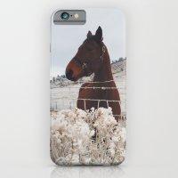 Snowy Horse iPhone 6 Slim Case