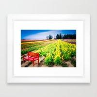 Bench and Tulips, Woodburn, Oregon Framed Art Print