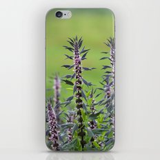 Motherwort - Leonurus cardiaca 4018 iPhone & iPod Skin
