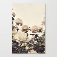 Yellow Rose Garden Canvas Print