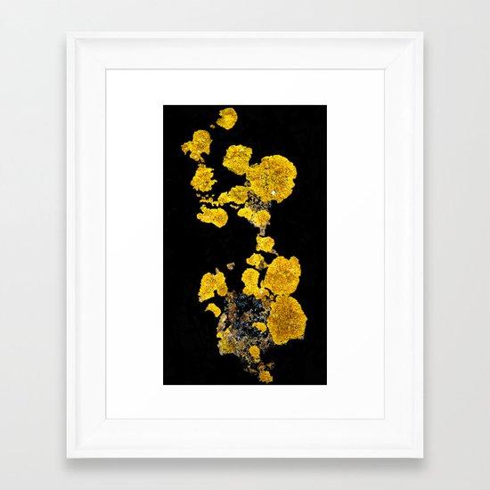 Yellow Lichen Framed Art Print