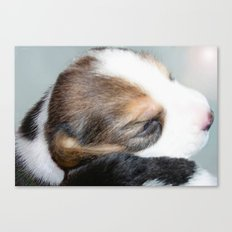 Baby Pearl Canvas Print