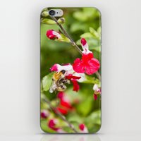 Busy bee in the flowers iPhone & iPod Skin
