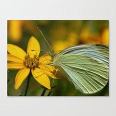 white moth II Canvas Print