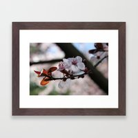 Sakura Framed Art Print