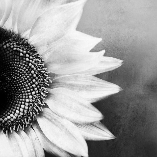 B&W Sunflower Art Print