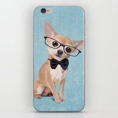 Mr. Chihuahua iPhone & iPod Skin