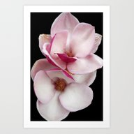 Tulip Magnolia Twins (bl… Art Print