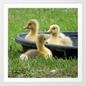 Three little goslings wildlife in the morning while drinking in the meadow in sepia Art Print