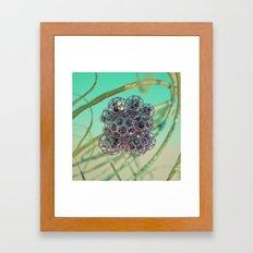 Arazu Framed Art Print