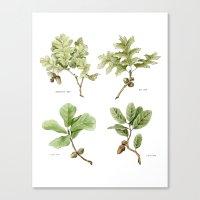 The Oaks Canvas Print