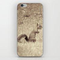 Nuts iPhone & iPod Skin