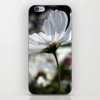 spring breeze iPhone & iPod Skin