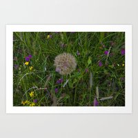 Field of flowers and Dandelions Art Print