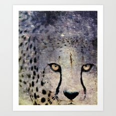 Cheetah, Namibia Art Print