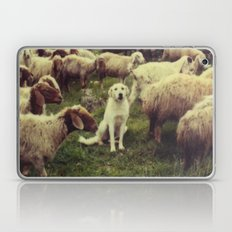 Herding dog, male, south of Israel, scaned sx-70 Polaroid Laptop & iPad Skin