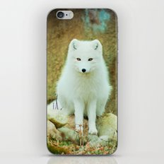 Snow fox iPhone & iPod Skin