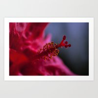 Red hibiscus 1 Art Print
