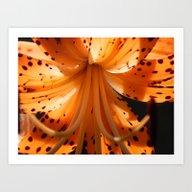 Sunlit Lily Art Print
