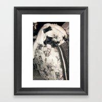 Lazy Pug Framed Art Print