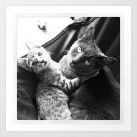 Gato Amore Art Print