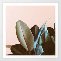 Ficus Elastica #1 Art Print