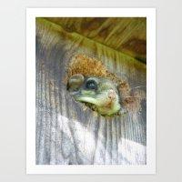 flying squirrel 2016 Art Print