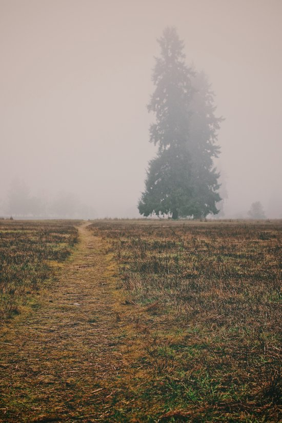 Hiking in the Fog Art Print