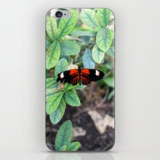 Butterfly Red iPhone & iPod Skin