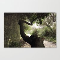 The Strange Trees Canvas Print