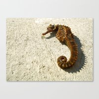 Seahorse Seahell Canvas Print