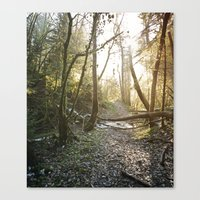 Lumière de Solstice II Canvas Print
