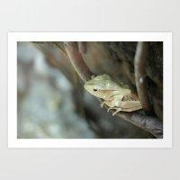 Froggy Style Art Print