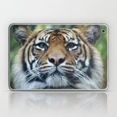 Tigers Glorious Stare Laptop & iPad Skin