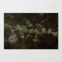 Tree Fuzz Canvas Print