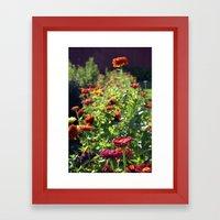 Fall zinnia's  Framed Art Print