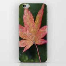 Japanese Maple Leaf 2 iPhone & iPod Skin