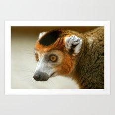 Male Crowned Lemur Art Print