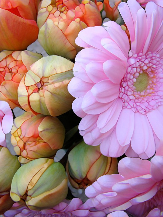 Daisy Loves Tulips Art Print