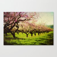 Orchard play Canvas Print