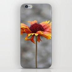 Firewheel iPhone & iPod Skin
