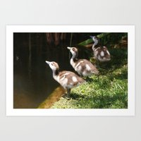 Three Little Ducklings Art Print